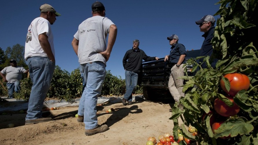 State Sen. Scott Beason, R-Gardendale (center) talks with tomato farmers about the new Alabama immigration law on Chandler Mountain in Steele, Ala. Beason, who helped draft the measure, said he was sticking by the law although he would try to find relief for farmers who rely on migrant workers to harvest their crops.